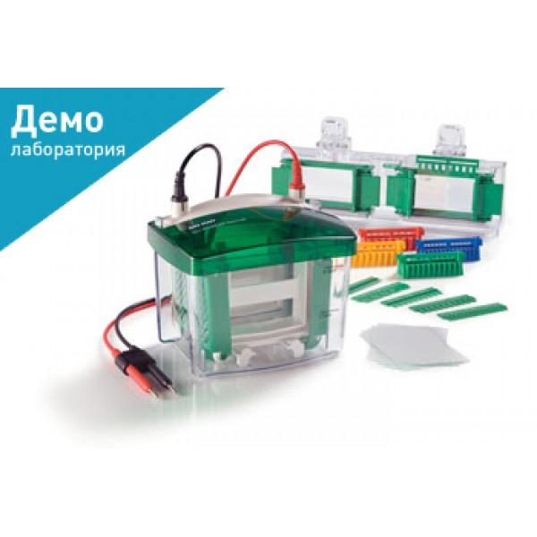 Камера для вертикального электрофореза Mini-PROTEAN® Tetra