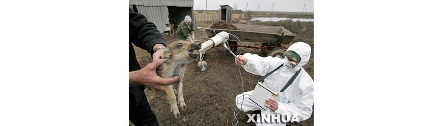 Радиационный контроль в ветеринарии (2)