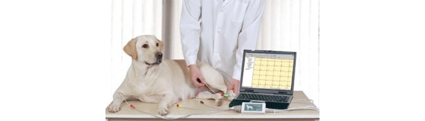 Ветеринария (38)